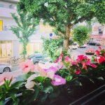 窓辺にお花が咲きました